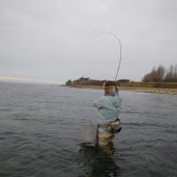 Fisk 011