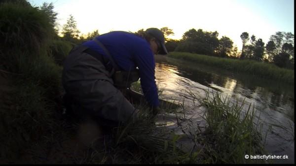 Siljas Salmon Release